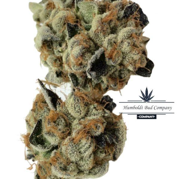 Sharklato weed